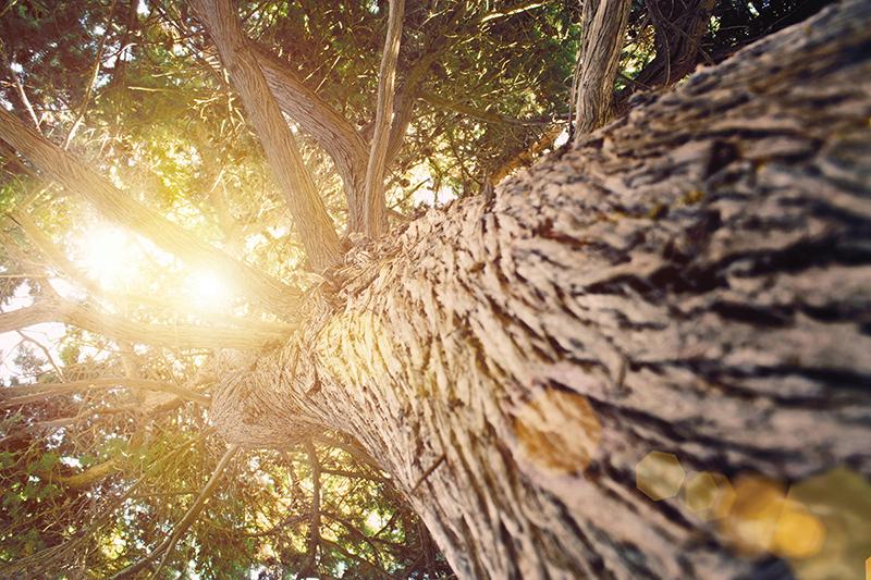 Rast nameštaj od punog drveta